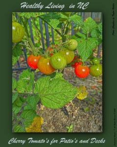 Cherrie Tomato's are an excellent choice for Patio's and Deck Gardening