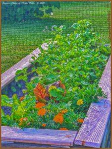 Backyard Raised Gardens- NC